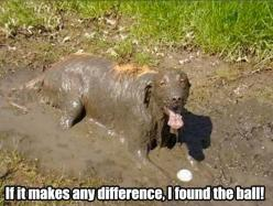 "Funny Dogs - ""If it makes any difference, I found the ball"" #dogs #pets #canine: Ball, Animals, Dogs, Stuff, Pet, Funnies, Funny Animal"