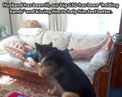 Further proof that dogs are the best… #germanshepherd #dog: Animals, Sweet, Best Friends, Dogs, Pet, Feel Better, German Shepherds, Funny Animal, German Shepard