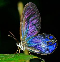 ~~glass wing butterfly, mother nature's stained glass~~: Beautiful Butterflies, Animals, Nature, Color, Flutterby, Moth