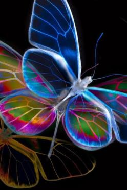 Glasswings: Beautiful Butterflies, Color, Neon, Art, Flutterby, Dragonfly, Glass Wing