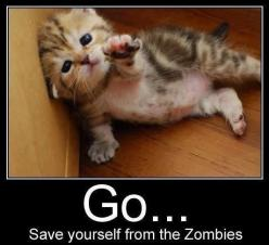Go... save yourself from the zombies: Cats, Kitten, Animals, Stuff, Zombie, So Cute, Funny, Things, Kitty