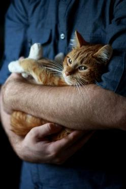 God made cats to give man the pleasure of stroking a tiger...  ~Francois Joseph Mery~: Kitty Cats, Animals, Meow, Kittens, Baby, Peace Sweet, Feline, Friend