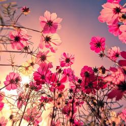 Google Afbeeldingen resultaat voor http://3.bp.blogspot.com/-qJqOTrMNQ4o/T2thwgvi8JI/AAAAAAAAFRU/0Yez_PPq11s/s1600/flowers_2.jpg: Picture, Pink Flowers, Nature, Color, Beautiful, Things, Pretty, Garden, Photography