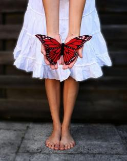 Google Image Result for http://faschismus.tk/uploads/butterfly-kisses-128204.jpg: Animals, Red, Butterfly Kisses, Butterflies, Butterflies, Art, Beautiful, Things, Photo