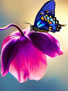Gorgeous Butterfly & Tulip: Beautiful Butterflies, Nature, Blue Butterfly, Color, Flutterby, Purple Flower