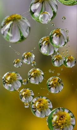 Gorgeous. http://www.trish120.wordpress.com: Water Drops, Waterdrop, Macro Photography, Drops, Dew Drops, Flower, Water, Rain Drop, Daisy Drop