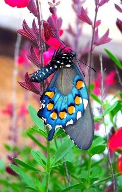 Gorgeous thing!!!    from Amazing Pictures http://pictures.furkl.com/wonderful-places/: Beautiful Butterflies, Nature, Color, Flutterby, Flutter By, Animal