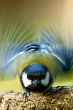 Great photo!  All a flutter!  Go to www.YourTravelVideos.com or just click on photo for home videos and much more on sites like this.: Photos, Animals, Takeoff, Iphone Wallpaper, Nature, Wings, Beautiful Birds