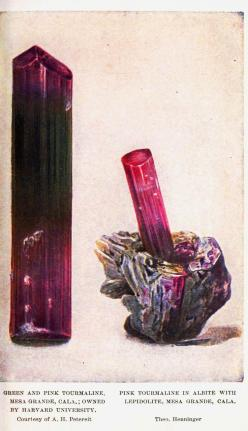 Green and pink tourmaline. A book of precious stones; the identification of gems and gem minerals, and an account of their scientific, commercial, artistic, and historical aspects ([1909]). Julius Wodiska. (via @JealousCurator): Pink Tourmaline, Gemstones