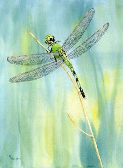 Green Dragonfly giclee print from a watercolor by maryellengolden, $30.00: Artists, Dragonfly Art, Green Dragonfly, Prints Watercolors, Dragonfly Giclee, Original Watercolors, Dragonfly Painting, Dragonflies