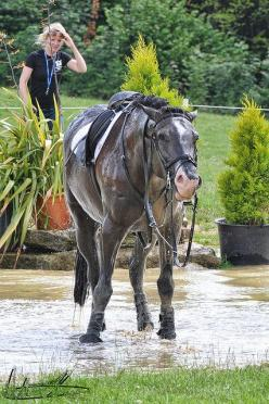 "heelsdown:  equitate:  SUCH an unimpressed face  HAHA he's like, ""I dislike peoples at this time. Very much. No more peoples."": Horses Eventing, Horse Stuff, Not Happy, Equestrian, Horsey, Animal"