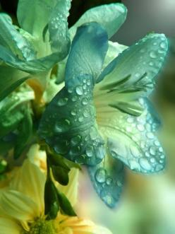 helena30:: Nature, Color, Green, Dew Drop, Beautiful Flowers, Flowers, Garden