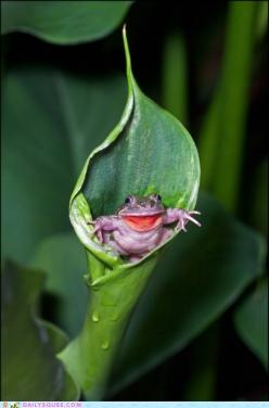 Hello! #frogs #animals #wildlife: Animals, Nature, Steve Passlow, Creatures, Frogs, Smile, Photo, Peek A Boo