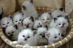 Here you go, a basket full of aaw~: Cats, Animals, Pet, Crazy Cat, Kittens, Baskets, Kitties, Kitty