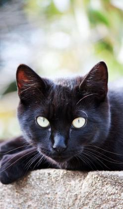 Hi, I'm Moonwatcher. I'm a tom with jet black with almost white eyes. I was kicked out of Waterclan because I slapped Riverpelt with a fish... Yes, I'm kidding. I was really kicked out because my clanmates believed that I killed a Airclan cat