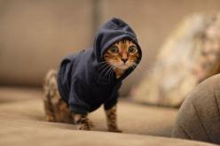 hipster kitty: Cats, Animals, Kitten, Pets, Funny, Things, Kitty