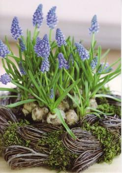 Hmmmm...I often find old nests while walking along the creek and woods with the dog and cats. Starting plants in them and then planting in the flowerbed or garden would eliminate the need for starting pots, and the nest would not only be an interesting fe