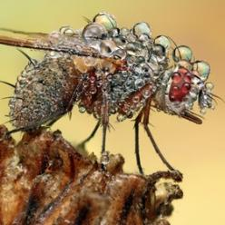 holy crap that photo is amazing!: Photos, Nature, Macro Photography, Dew Drop, Ondrej Feed, Insects