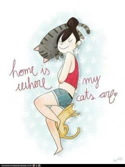Home is where my cats are^.^ So true: Cats, Kitty Cat, Animals, Meow, Catlady, Crazy Cat, Homes, Cat Lady