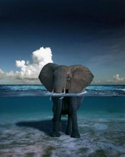 How amazingly beautiful is this picture!: Picture, Photos, Elephants, Water, Animals, Nature, Beautiful, Photography