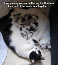 How precious !!: Cats, Animals, Sweet, Pet, Co Mothering, Baby, Kittens, Families, Kitty