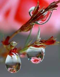 How so pretty .: Rose, Water Drops, Waterdrop, Nature, Dew Drops, Dewdrop, Photo, Flower, Rain Drop