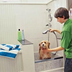 How to plan a dog cleaning station that makes bath time a breeze. | Photo: Bob Stefko | thisoldhouse.com: Dog Shower Ideas, Doggie, Dogs, House Ideas, Dream House, Mud Room, Dog Bath Ideas, Dog Cleaning, Laundry Room