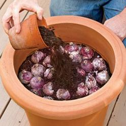 How to Plant Bulbs in a Container - planting in fall and leaving outside during winter will bring forth better blooms because of the exposure to winter cold!: Winter Cold, Garden Container, Container Garden, Fall Flower Bed, Better Blooms, Plant Bulbs, Ga