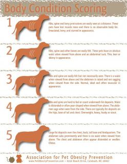 How to tell if your #dog is a healthy weight #pet-health-tip: Dogs, Pet Care, Pet Obesity, Weights, Pet Health, Healthy Weight, Body Weight, Animal