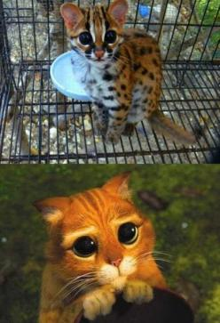 Humor Train - Funny Pictures, Pic Dumps, Animals and GIFs.: Cute Animals (25 Pics): Cats Humor, Animal Pics, 25 Pics, Cute Animals, Funnies, Funny Animal, Animals 25, 11 Funny Pictures 512 Jpg