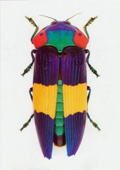 """I'd call it """"color blocked beetle""""!: Beautiful Beetles, Colorful Insect, Nature, Bugs, Beautiful Colors, Insects"""