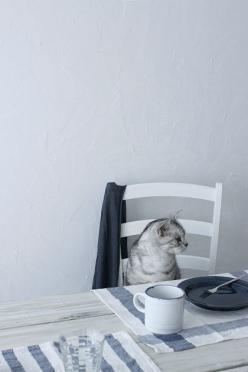 I'll have my eggs with cheese and catnip please. And hold the coffee, I'll just have the cream.: Beautiful Cat, Cute Cats, Kittens, Feline, Tea, Animal