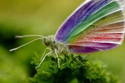 I ❤ butterflies . . . Rainbow Butterfly: Beautiful Butterflies, Animals, Bugs, Color, Rainbows, Insects, Photo, Birds