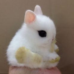 I can't even take it, my eyes are melting. That's the level if cuteness. <<<< OF COURSE YOUR EYES ARE MELTING. ITS A DEMON. IT HAS BLACK EYES WHAT WERE YOU THINKING: Rabbit, Babies, Animals, So Cute, Baby Bunnies, Adorable, Eye