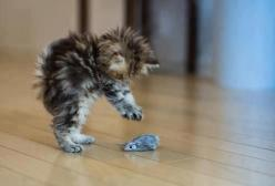 I gots youuuu...but you scareded me!!!: Cats, Mice, Animals, Pet, Funny, Kittens, Kitties, Photo, Kitty