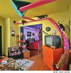 I have a feeling that if we lived together, we'd had tons of cat stuff like this in our apt lol: Cats, Idea, Pets, Crazy Cat, Cat Houses, Cathouse, Kitty, Animal, Cat Lady