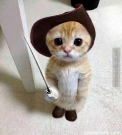 I have no words. Ha!: Cats, Animals, Cuteness, So Cute, Pet, Funny, Adorable, Kittens, Kitty