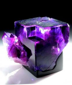 I have no words to describe how perfect I think this piece of fluorite is! Oh my that's hot!: Crystals, Gemstones, Precious Stones, Purple, Nature, Beautiful, Rocks, Minerals