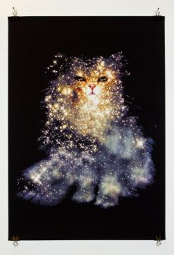 I have The British Shorthair and The Pelican Nebula on a shirt but I'd love  a print of another of Zippora Lux's Celestial Cats.: Galaxy Cat, Cosmic Cat, Celestial Cats, Space Cat, Art, Massive Stars, 30 Doradus, Kitty, Animal