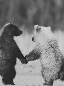 "I just had to ""pin"" this on my Pinterest account because it's just too damn cute. #cmonson #iamsappy: Animals, Sweet, Friends, Bears, Bear Cubs, Photo, Holding Hands"