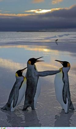 """I know you did it! *look in the back round* """"WEEEEEEEEEE! YOU GUYS NEED TO STOP YOU'RE YOUR BLUBBERING AND HAVE SOME FUN!"""": Animals, Nature, My Girl, Funny, Penguins, Photo"""