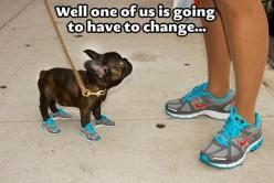 I laughed harder than I probably should have hahahah: Shoes, Animals, Dogs, Pet, Funny Stuff, Funnies, Humor
