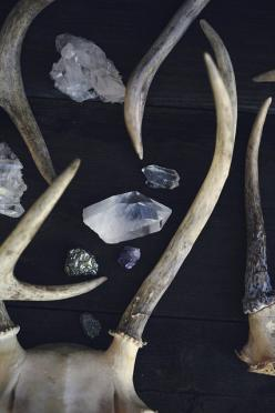 I love all treasures from nature.  Stones, feathers, antlers, bones, sticks, branches, herbs, pinecones...all are treasures to me.: Crystals, Nature, Mineral, Antlers, Rock, Stones, Stag