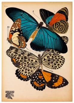 I love this blue and rust together. : Butterfly, Butterflies, Illustration, Butterflies, Free Printable, Design