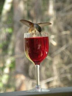 I love this! Hummingbirds will go for anything that is red! Just make sure it is hummingbird nectar in the wine glass rather than wine!! ♥: Wine, Humming Birds, Animals, Red, Sweet, Hummingbirds, Hummer