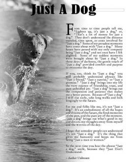 """I may have cried when I read this. A lot of people have said """"they are just dogs"""" to me before. No, they are not. They are part of my family and to me Abby and Tex have never and will never be """"just a dog"""" to me or Josh. There is no price"""