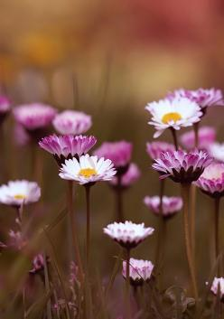 I think it pisses God off if you walk by the color purple in a field somewhere and don't notice it.   Read more at http://quotes.dictionary.com/I_think_it_pisses_God_off_if_you#zPGhlXw80PcmyelE.99: Wildflowers, Nature, Daisies, Posts, Beautiful Flower