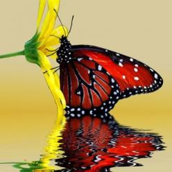 I think we take butterflies for granted, but they're so beautiful and it's so crazy how complex a life something so small can have...God worked hard on the planet He made here...: Beautiful Butterflies, Butterfly, Nature, Red Butterfly, Yellow Flo