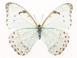 I want a big print of this: Animals, Inspiration, Butterflies, Art, Things, Photography, White Butterfly