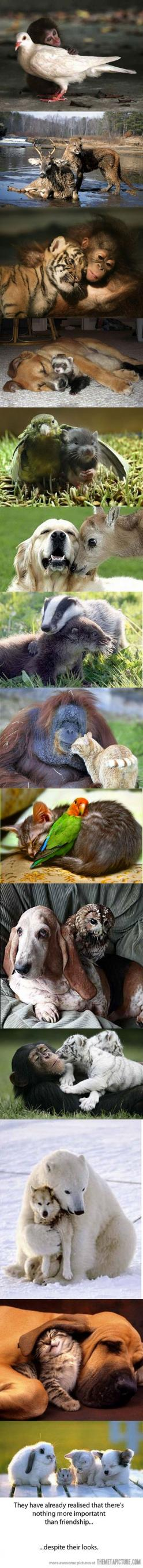 If animals can grow and learn with another, despite differences in appearance, then why can't humans do it?: True Friendship, Unexpected Friendship, Best Friends, Sweet, Odd Animal Couple, Odd Couple, Unlikely Animal Friend, Animal Friendships, Odd An